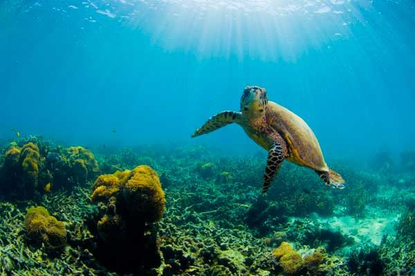 IN06-sea-turttle-madagascar-inaki-relanzon.jpg