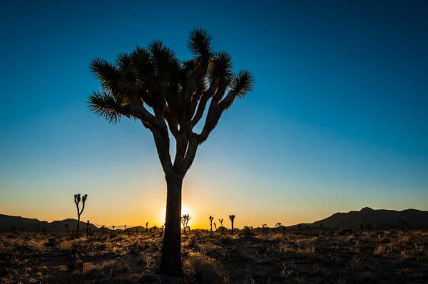 IN11-joshua-tree-california-inaki-relanzon.jpg